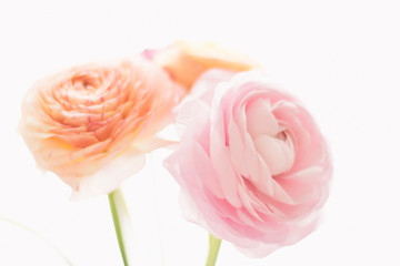 pink rose flowers from the garden - wedding, holiday and floral garden styled concept