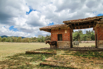 Small Sardinian horses shelter from the sun under an old structure in a Mediterranean rural...