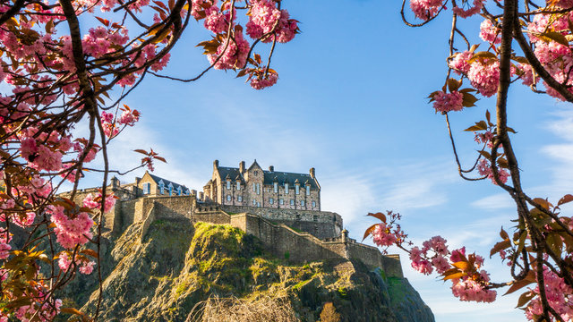 Edinburgh Castle framed by cherry blossoms on a beautiful blue sky Spring day, famous tourist attraction  in Scotland ,UK.