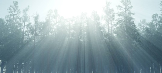 The trees in the fog, the forest in the haze, the morning in the forest with smoke