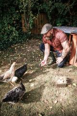 Man in his own garden, man feeding free range chickens