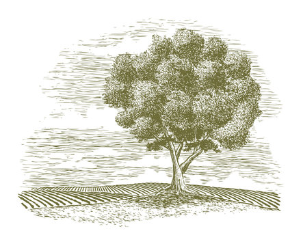 Woodcut Tree and Countryside