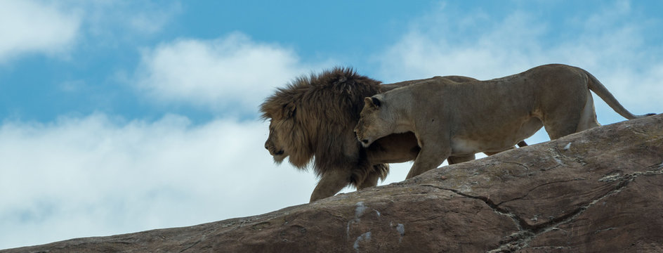 Lion & Lioness walking down slope in rock formation with blue sky and light cloud