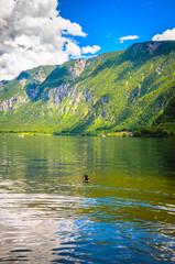 Wall Mural - Fantastic landscape of Hallstatt lake with ducks, Austrian Alps,  Salzkammergut, Austria, Europe