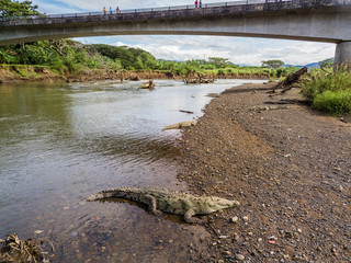 Aerial view of the crocodiles in the Tarcoles river in Costa Rica