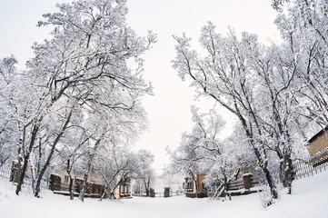 Snow-covered trees on the street. Beautiful winter cityscape