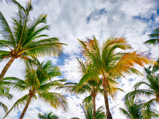 Palm trees against sky, tropical vacation