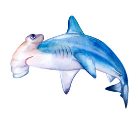 Hammerhead shark. White death of a shark isolated on a white background. For design, prints, background. Watercolor. Illustration. Template. Card. Clipart. Close-up.
