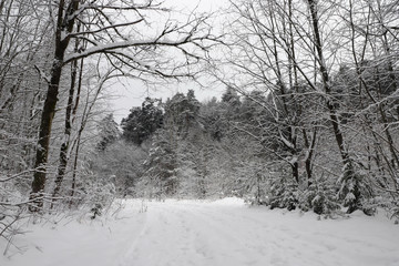 Road in the snowy forest in winter.