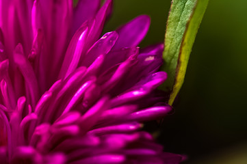 Macro photo of wildlife, flowers and leaves of plants.