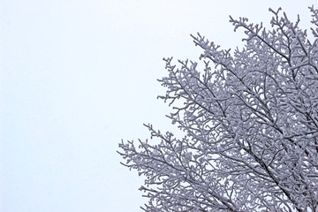 close-up of a bare winter tree, covered with snow