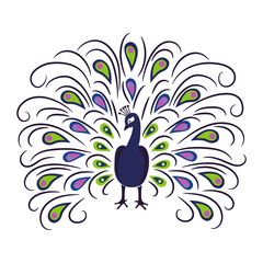 Hand drawn  peacock isolated on white background. Vector illustration.
