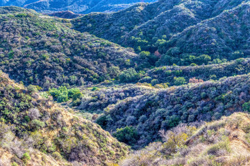 Winter in Southern California forest with hiking trails