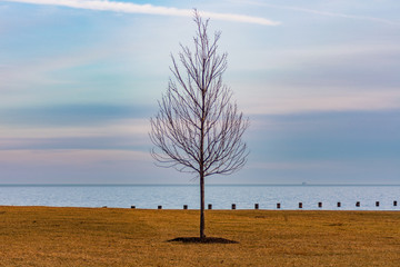 Single Bare Tree along the Shore of Lake Michigan in Chicago during Winter