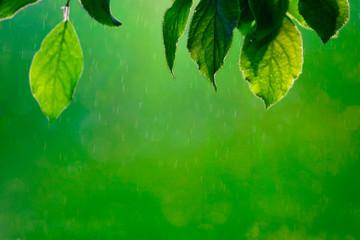 Fresh green tree leaves, frame. Natural background
