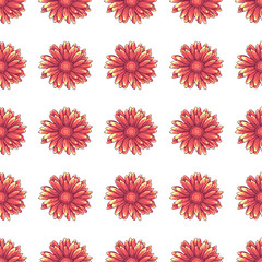 Seamless pattern with pink daisy flowers