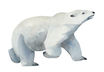 Watercolor illustration. A white polar bear stands. Splashes sketch of wild north animals