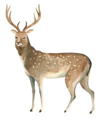 Watercolor illustration isolated on white background. A brown deer stands. Splashes sketch of wild forest north animals
