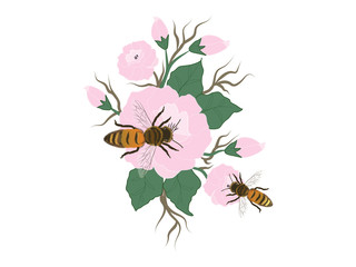 Bee and pink flowers with buds and green leaves - isolated n a white background - vector