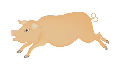 Pig is a cheerful, fat, pink piglet, with a smile - isolated on white background - vector