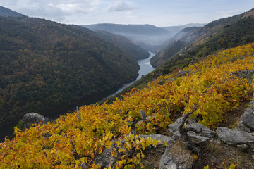 Autumnal colors in the vineyards on the river Sil