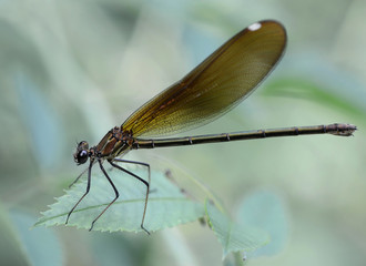 dragonfly stands over a leaf