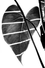 Leaf looks as Heart