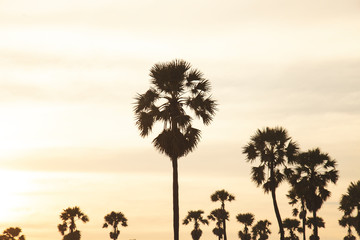 view of Palm trees  with beautiful sky In the evening