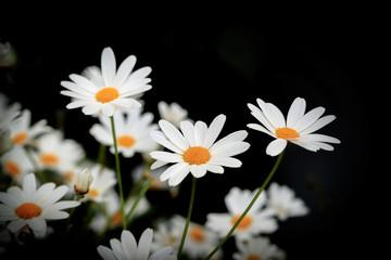Beautiful flowers. July 2018