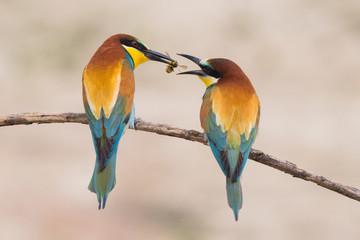 Birds standing on tree branch