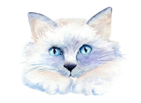 watercolor drawing of a cat with bright eyes