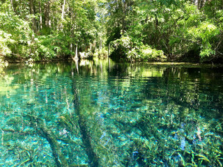 Florida, USA - July 31, 2018: America's largest spring sits untouched within Silver Springs State Park Wall mural