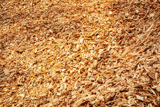 background of birch tree wood chips close up