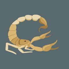 Scorpio vector illustration,flat style ,profile