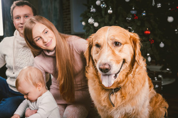 theme Christmas and New Year family circle and domestic pet. Mom dad and child 1 year old Caucasian woman sitting on floor near Christmas tree with gifts and big dog breed labrador golden retriever