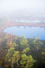 Pure morning light and fog over the swamp, blue water and green pine trees. A view from the watching tower. Kemeri, Latvia