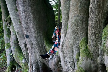 Lady's legs in the cleft of beech trees