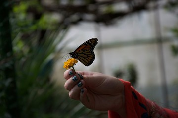 Shadowy silhouette of a butterfly perched on a flower in someone's hand
