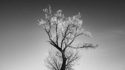 Single tree on a frozen meadow, with white sky in the background Wall mural