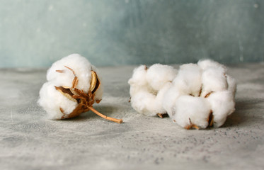 Group of cotton flowers heads close-up