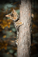 Young Bengal on Tree