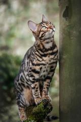 Bengal on Tree
