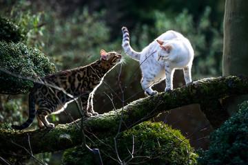 Bengals on Tree