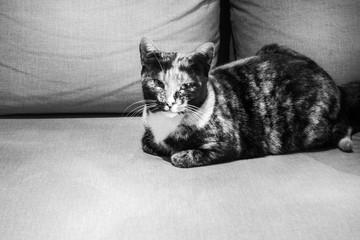 Sitting image of a cat Crete Greece Europe
