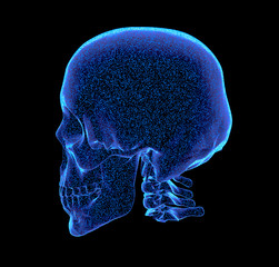 rendered bluish x-ray image of human skull - oblique projection, 3D Illustration