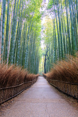 Pathway through Bamboo forest in Kyoto, where is the landmark of Japan