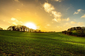 Sunset over winter crops at Combe Valley near Bexhill, East Sussex, England