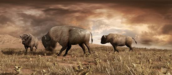 Buffaloes on the prairie Wall mural