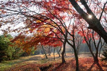 울긋불긋 단풍이 물들어가는 가을 풍경