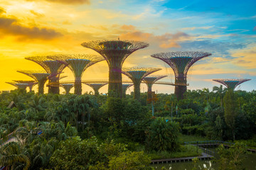 View of Supertree Grove from Gardens by the Bay, Singapore.  Fototapete